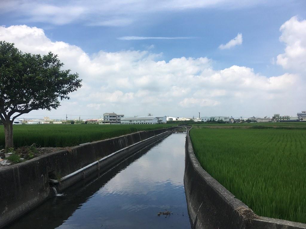 陡直、光滑的混凝土護岸,多處攔水堰及固床工,是流經農業區的區域排水常見的樣貌,一直以來,這些剛性結構物提供快速排洪、保護農地、效率取水、增加產能等滿足人類需求的功能。圖為流經台中市烏日區及霧峰區的后溪底排水。拍攝:顧玉蓉。