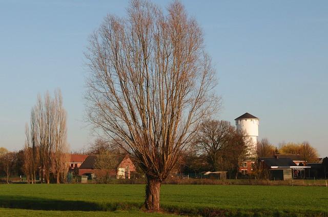 knotwilg en watertoren