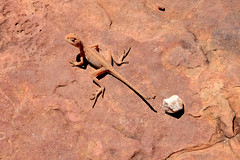 Kings Canyon Rim Walk - The Guardian Of The White Pebble