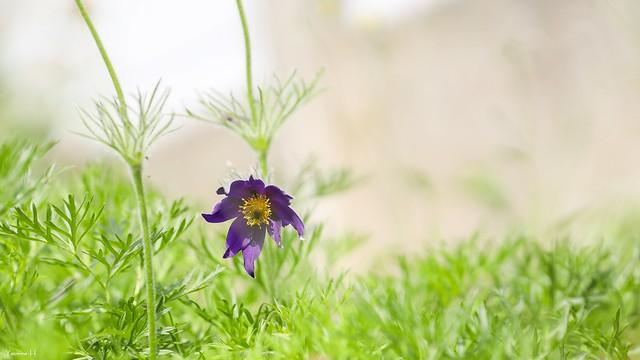 Single Flora - 6984