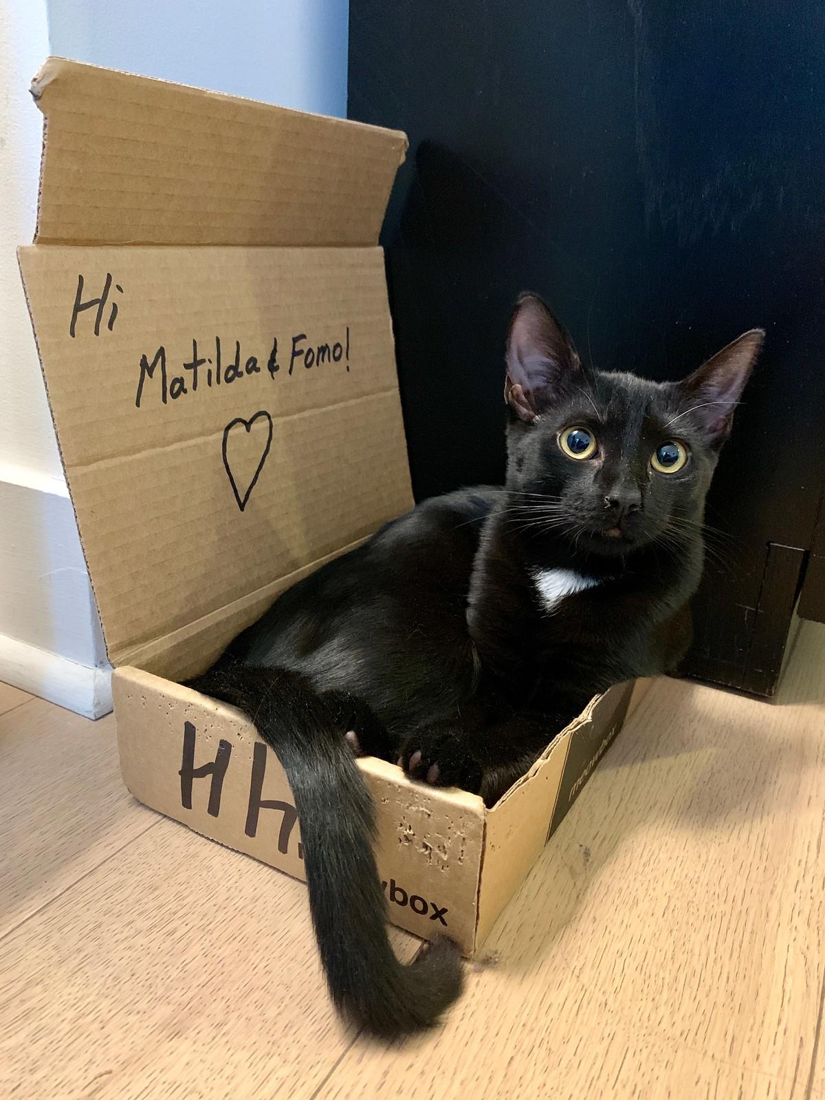 Matilda in a Meowbox