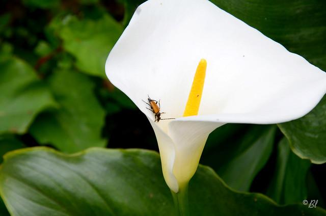 la petite bête sur la grande fleur