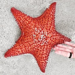 #StarFish :heart: #Photography by #BluedarkArt
