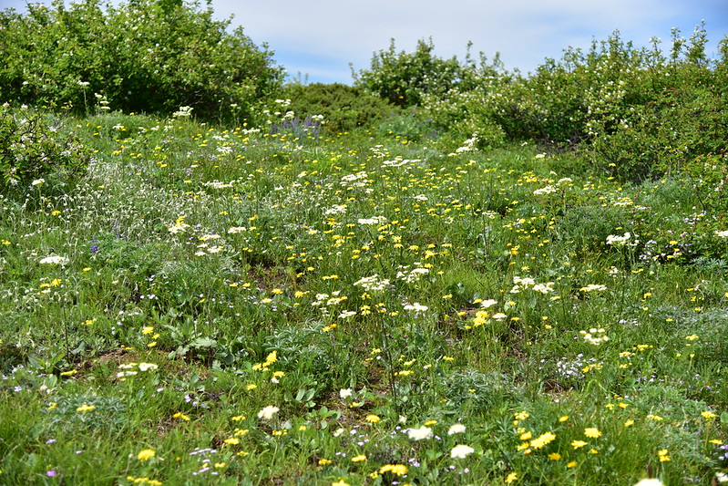 Grassy Knoll Hike