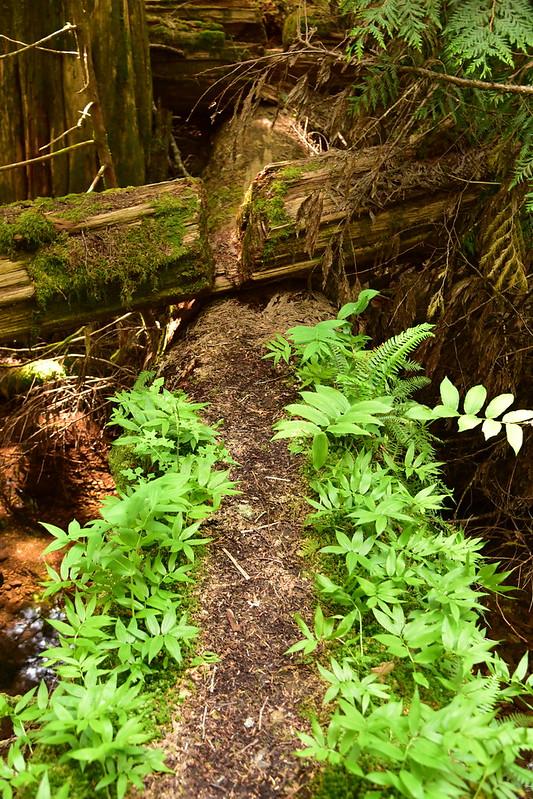 Log trail