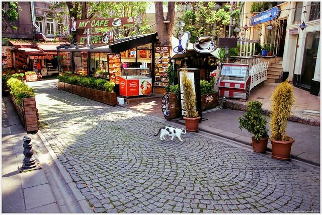 Istanbul is a city of cats   Стамбул - місто котиків