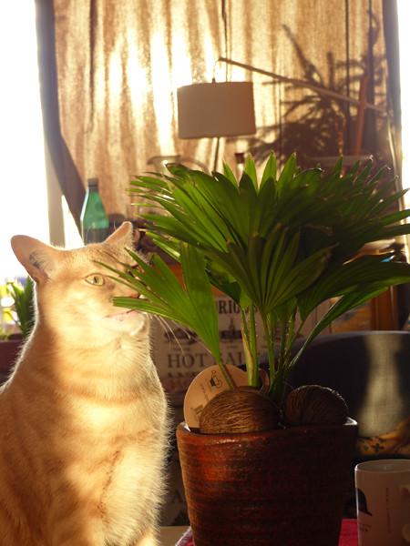 chic, une nouvelle plante !