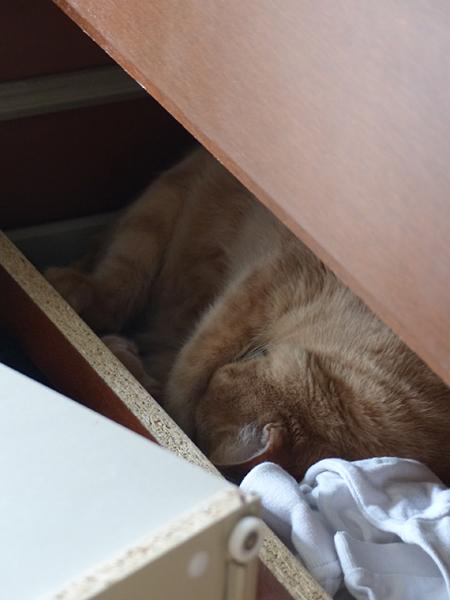 chat planqué
