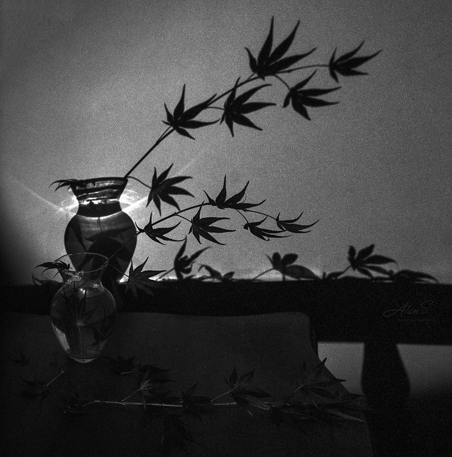 Jar, Leaves, and Shadow - Film Hasselblad