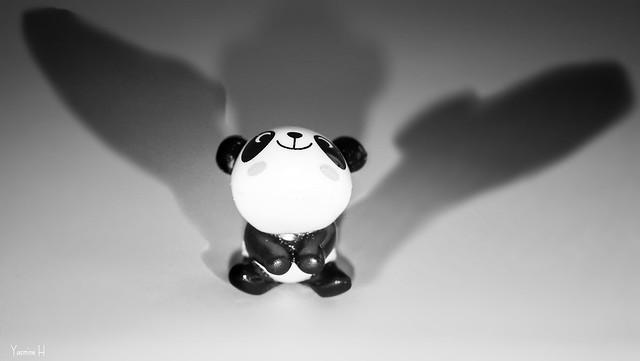 Shadows - 6985