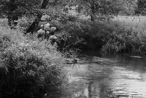 landscape river bank islotch belarus bw пейзаж чб река ислочь беларусь берег belarusian nature