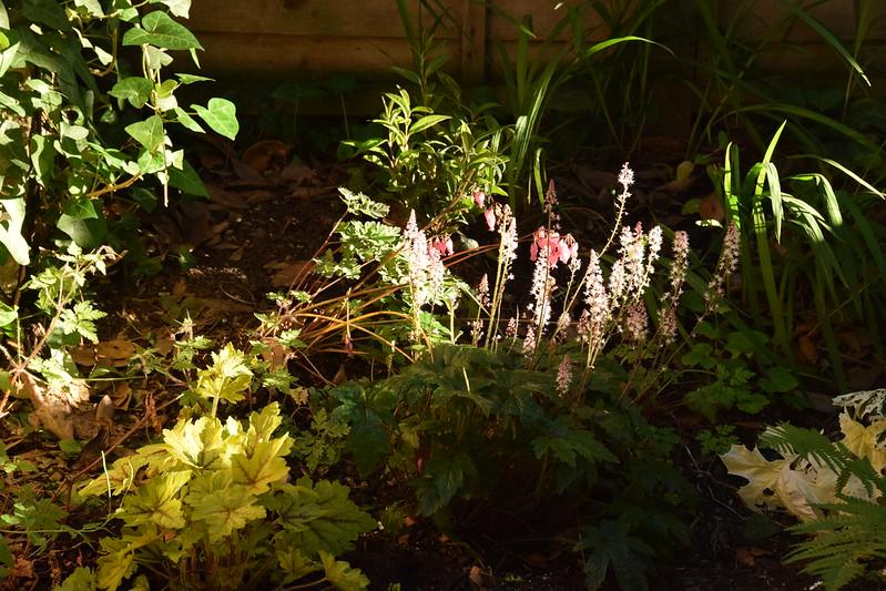Back bed in evening sunshine dapples