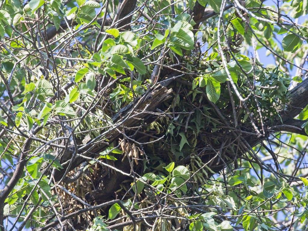 Frustration nest
