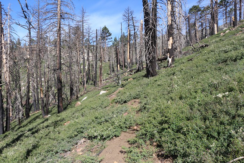 We're back on the traverse section of the Laws Trail - the Willow Creek Trail junction is ahead at that saddle