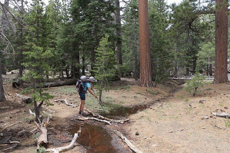 Vicki plays with a small stream, floating an impromptu wooden boat as we hike on the Hidden Lake Divide Trail