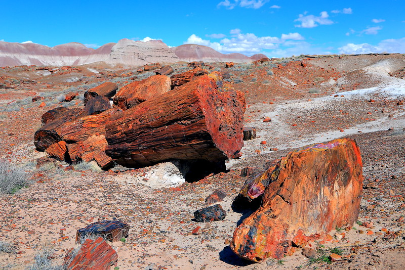 IMG_0275 Long Logs Trail, Petrified Forest National Park