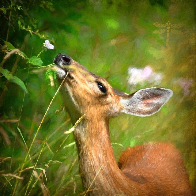 . . . a female deer