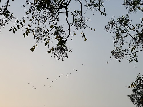 City Nature - Homeward-Bound Birds, Central Delhi