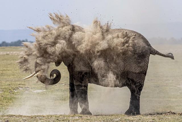 ELEPHANT POUSSIERES-0706