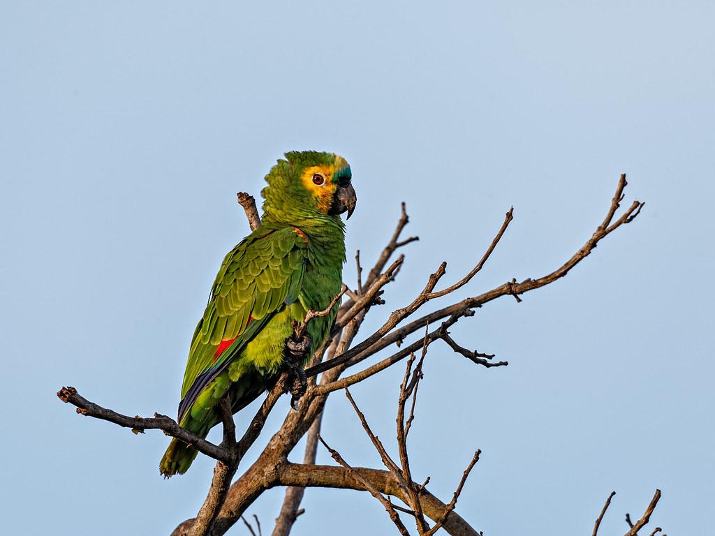 Pantanal_4243