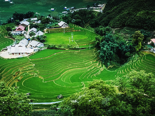 Sapa terrace field | by VIVID_18