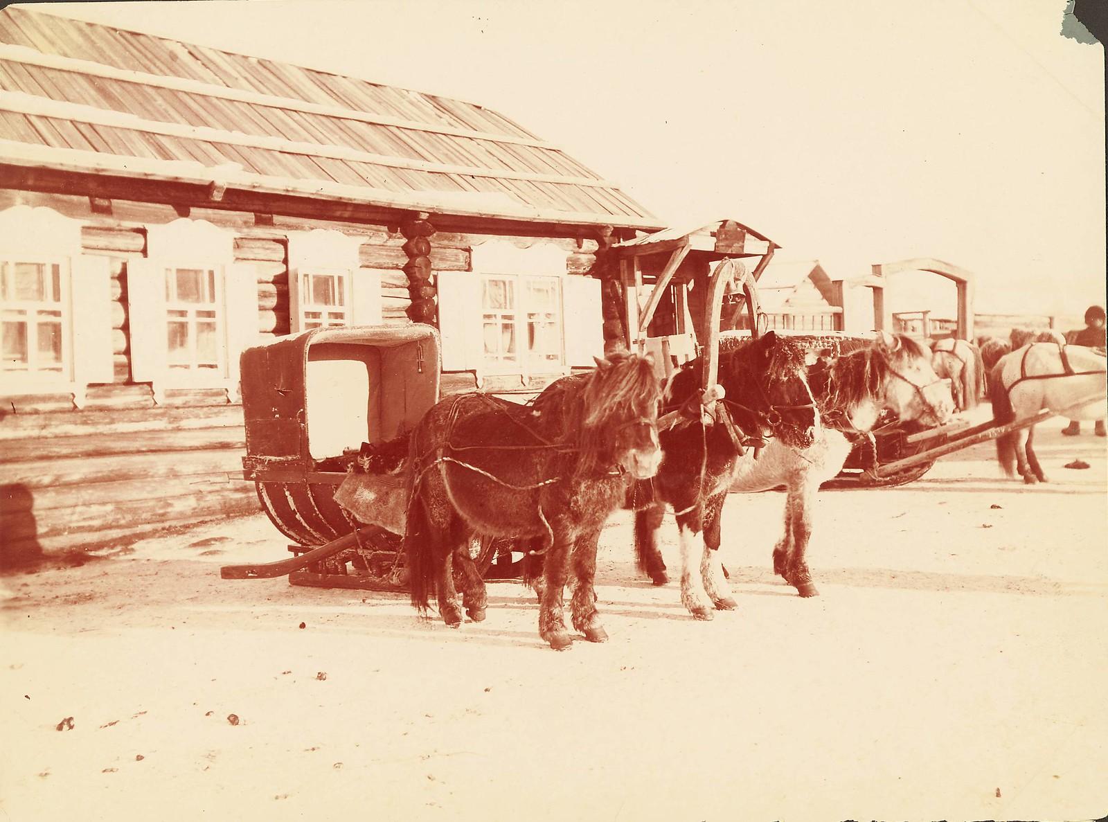 Хабаровская почтовая станция. Типичные почтовые санки и пони, используемые в транссибирских путешествиях. (санки, в которых я катался за 4000 верст - почти 3000 миль