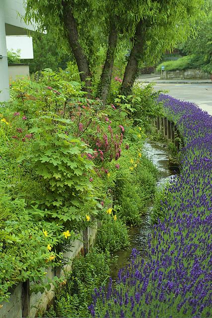 Last Look at Lavender