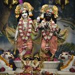 ISKCON Ujjain Deity Darshan 25 June 2019