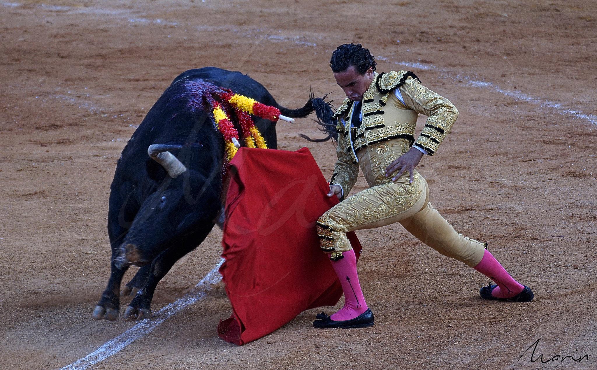 Toros Algeciras 2019 - 10