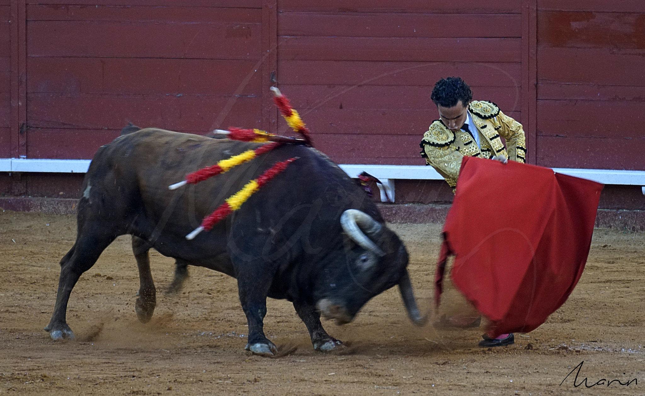Toros Algeciras 2019 - 17
