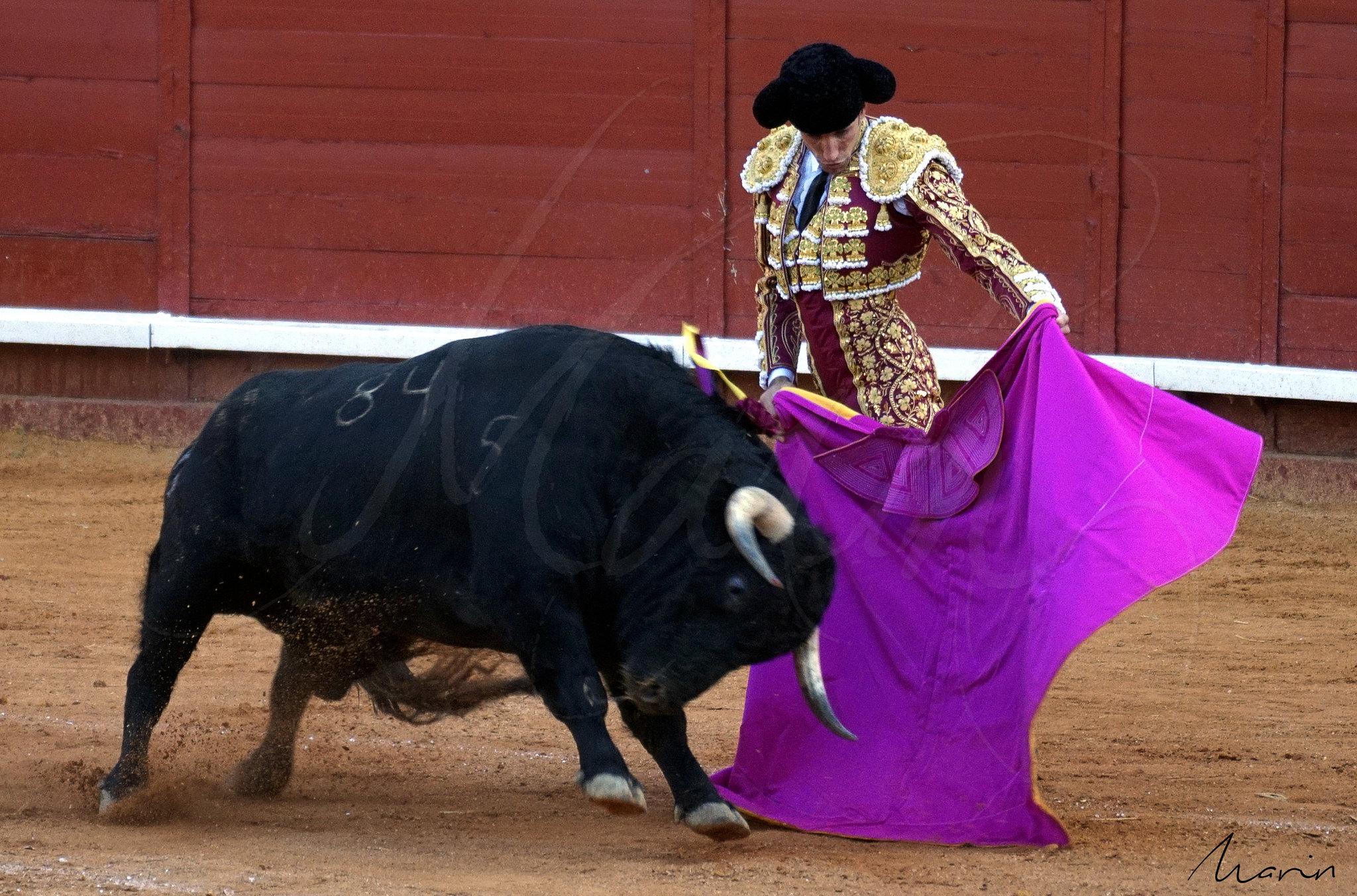Toros Algeciras 2019 - 11