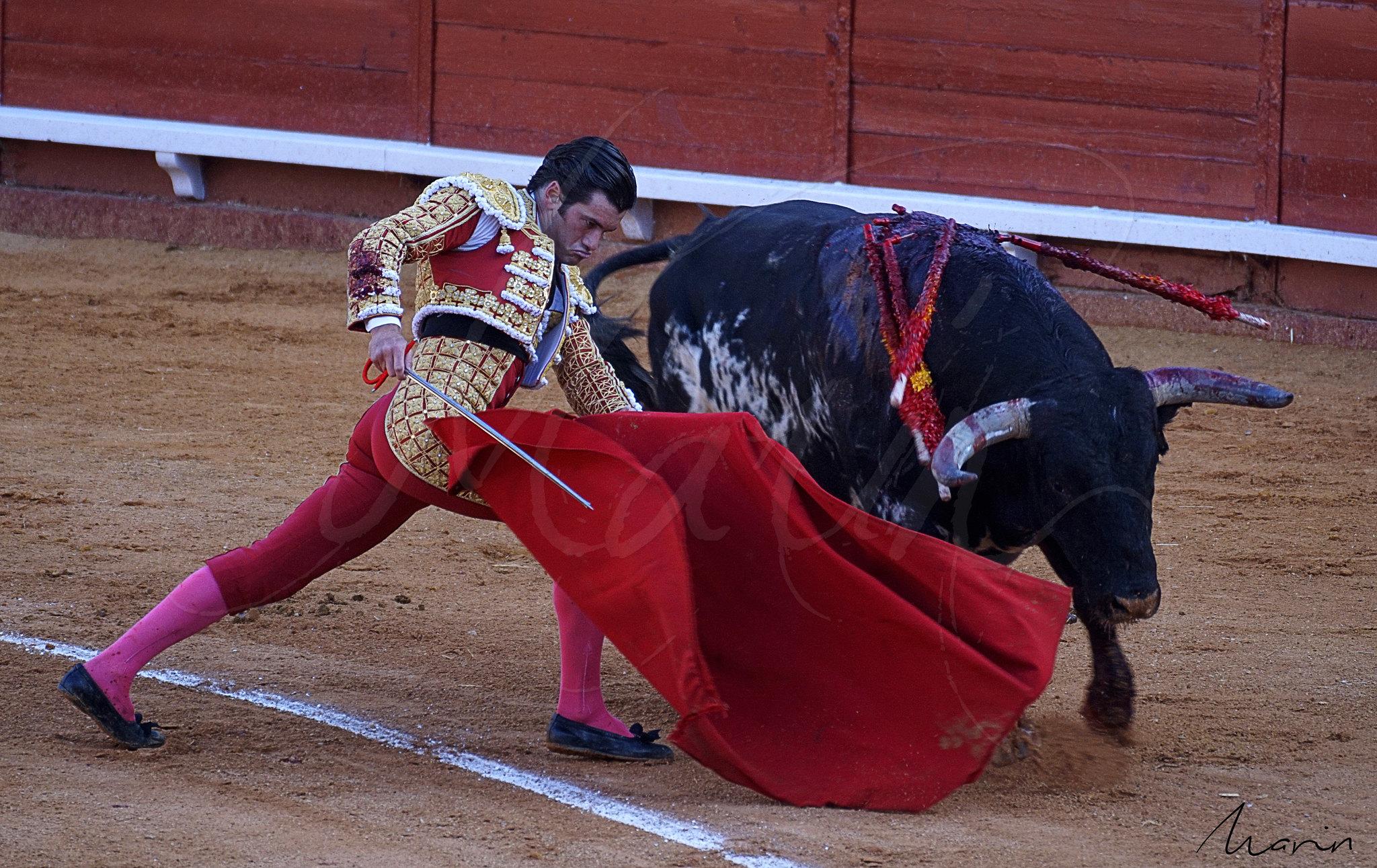 Toros Algeciras 2019 - 7