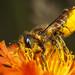 Mega Bee