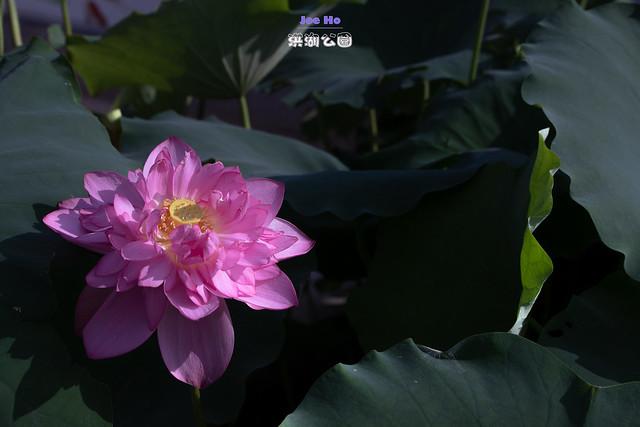2019年06月16日 - 深圳洪湖公園