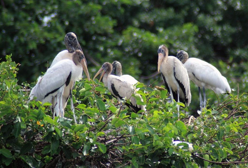 Stork Convention