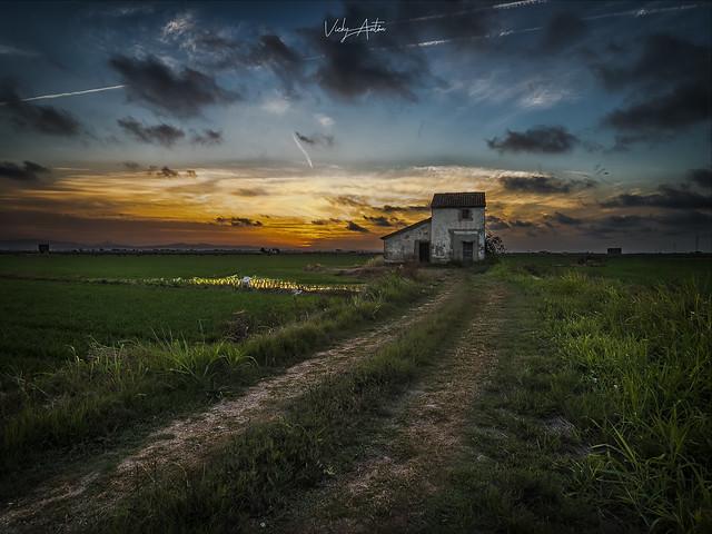 Entre los campos de arroz