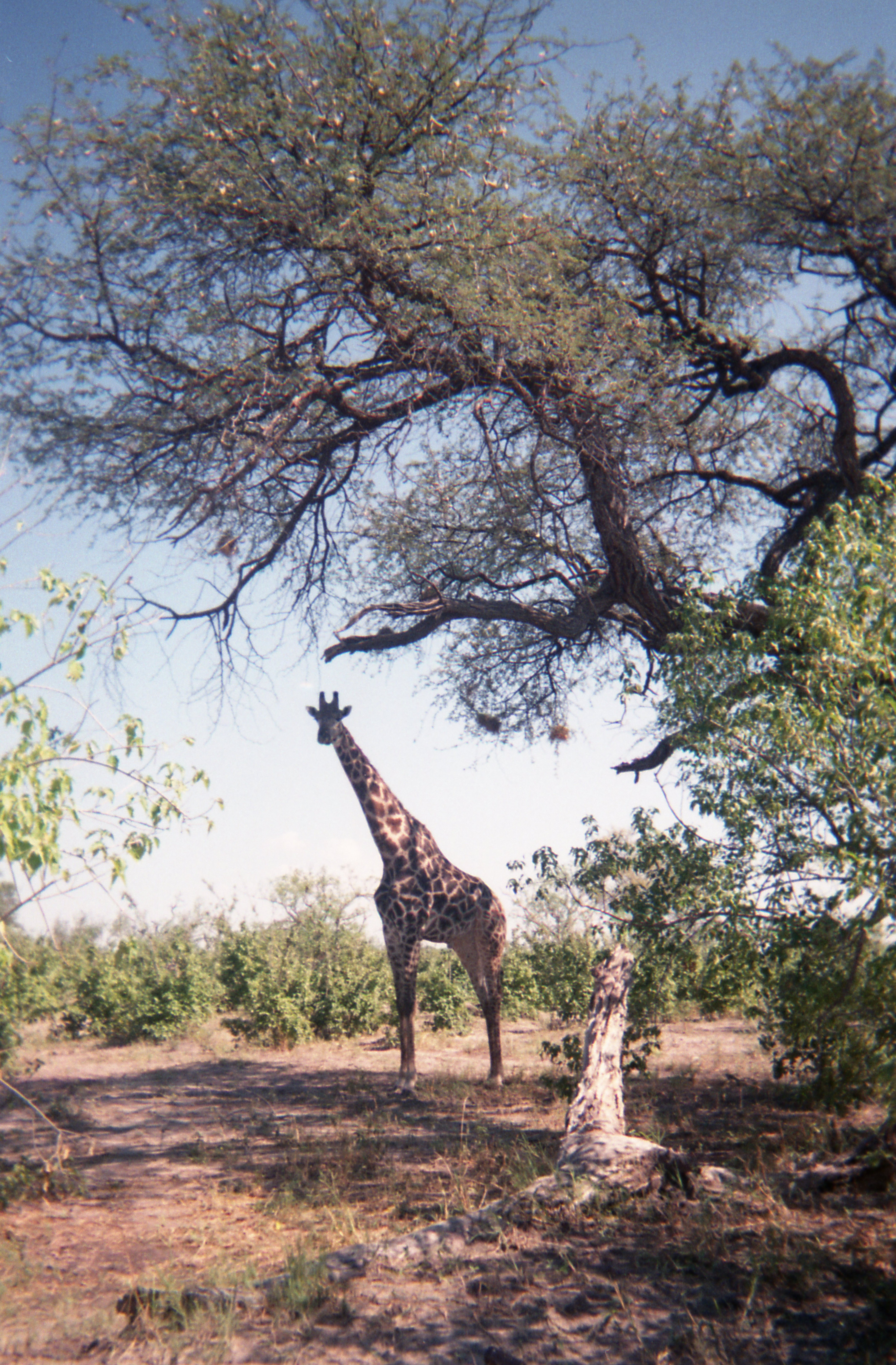 África en analógico