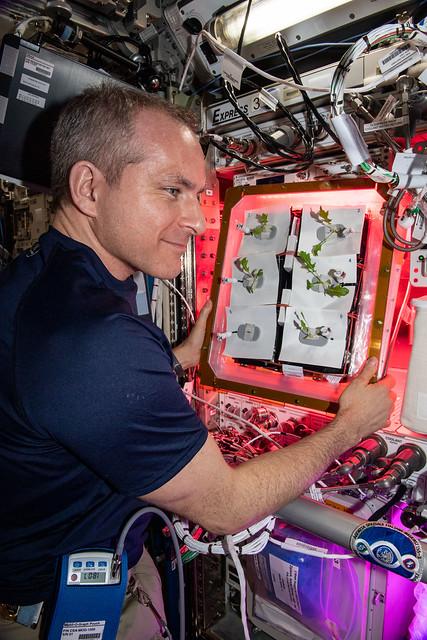 Canadian Space Agency astronaut David Saint-Jacques checks plants