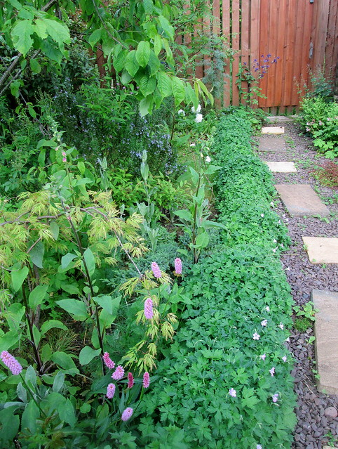 my garden, side of path