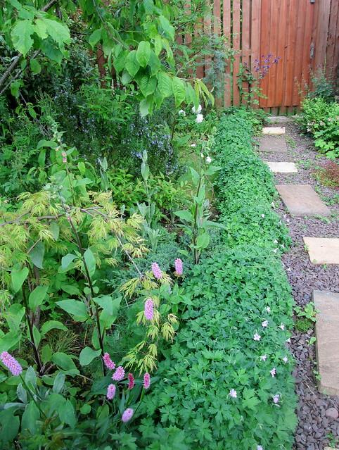 my garden, side of path