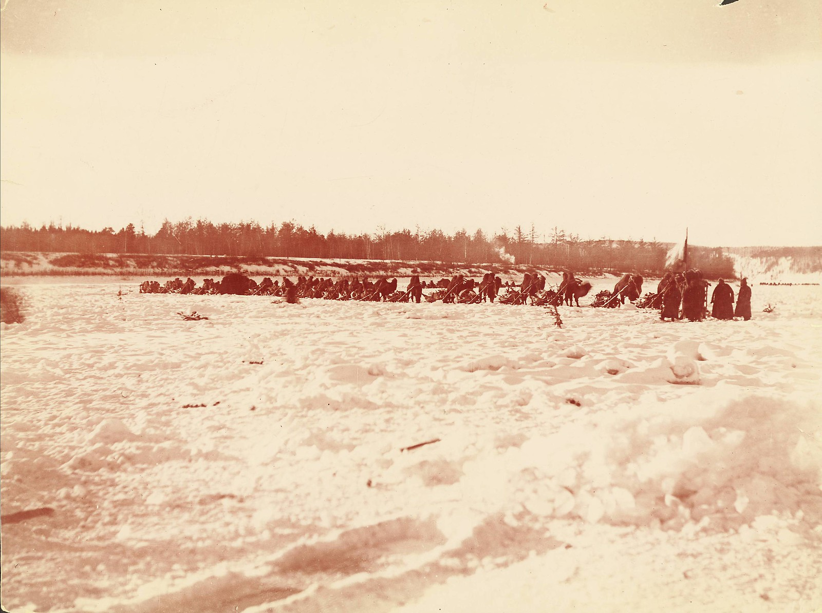 Военный караван верблюдов на Амуре