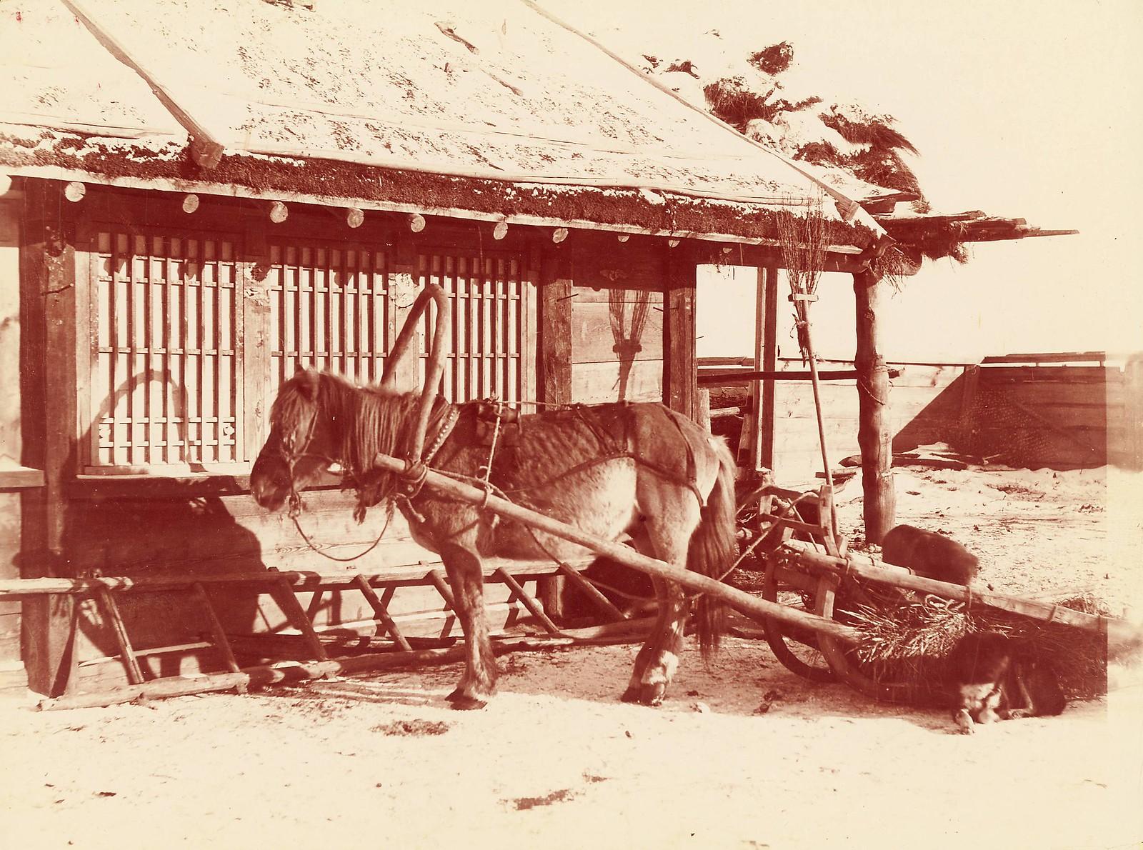 Маньчжурская порода лошадей