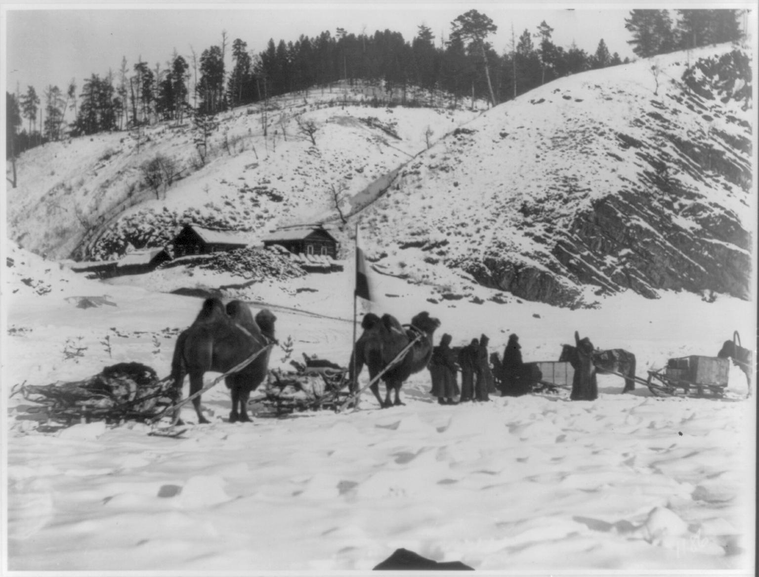 Военный караван верблюдов на Амуре близ Албазина