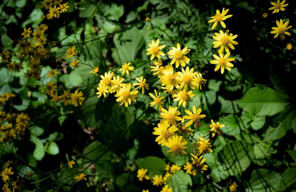 Yellow Wildflower 1