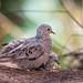 Bahamas Love Birds