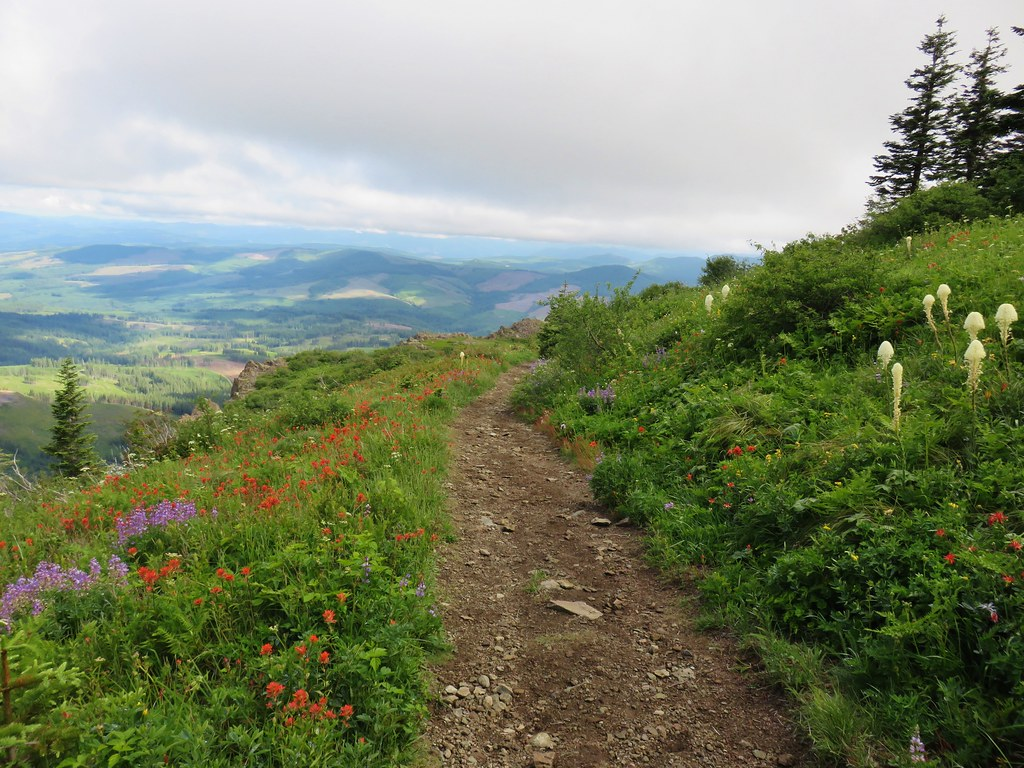 Wildflowers along the Silver Star Trail