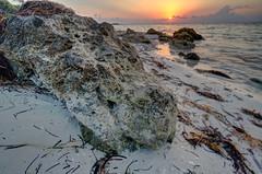 Limestone Gator Head