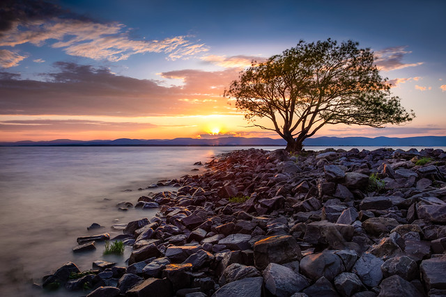 Saule seul -   Lonely Willow tree,  Kamouraska Qc.