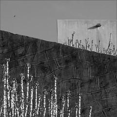 walls, bamanwadji