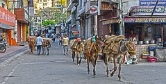 Traffic in Rishikesh India DSC_4060